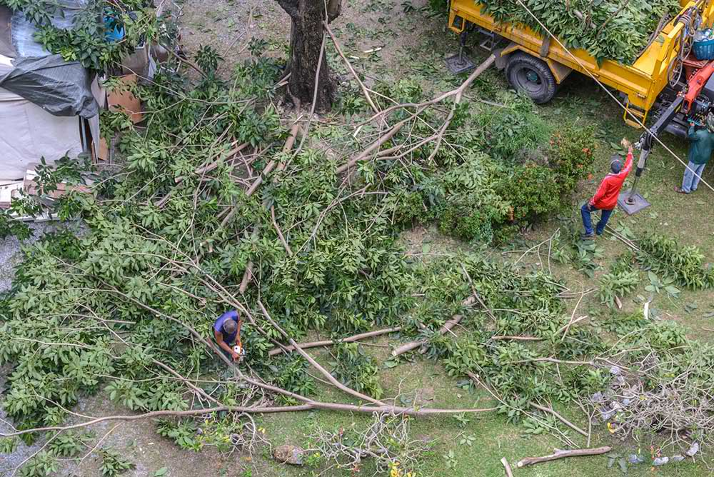 Tree Service Roseville - Tree Trimming